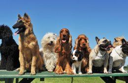 Dünyada Kaç Köpek Irkı Var?